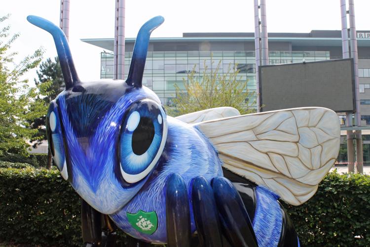 Blue Bee-ter