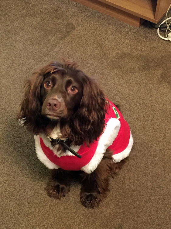 Dressed for Christmas: Betty