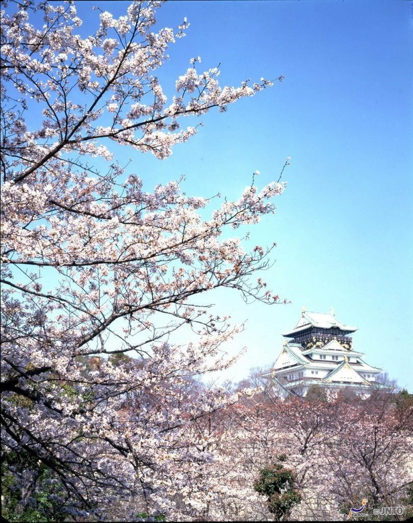 Osaka Castle Cherry Blossoms ©Osaka Convention & Tourism Bureau/©JNTO
