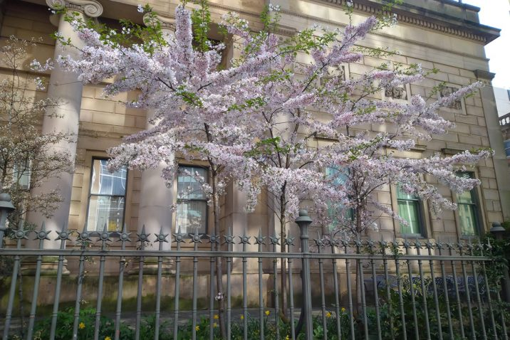 Manchester Art Gallery in bloom