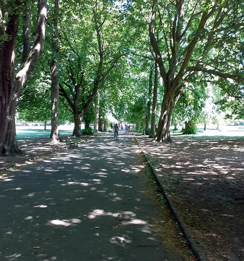 Tree-lined walkways in Longford Park