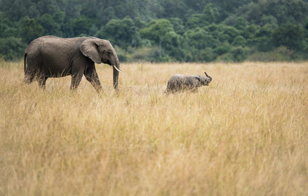 Masai Mara National Reserve, Kenya Photo by David Clode on Unsplash