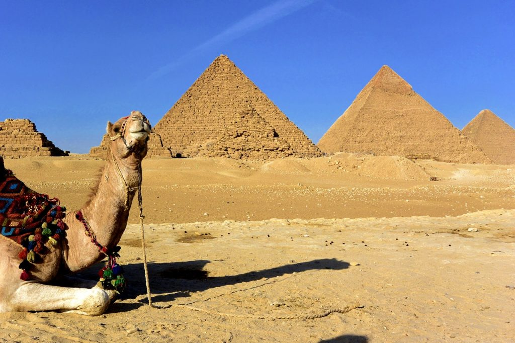 Pyramid and camel in Egypt