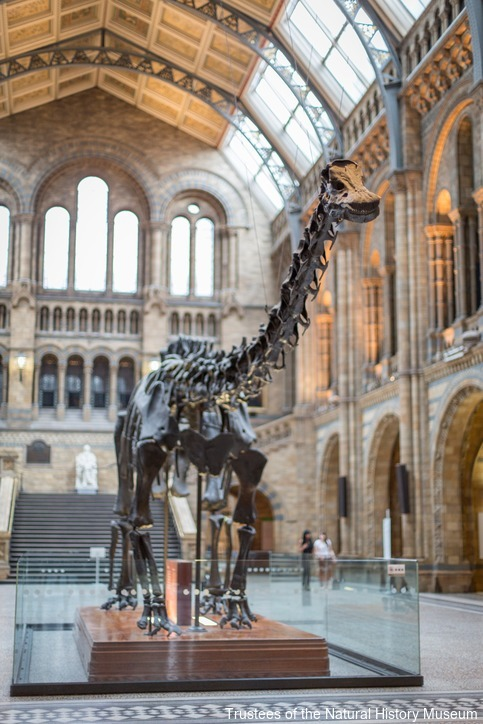 The Diplodocus exhibit Credit: Trustees of the Natural History Museum