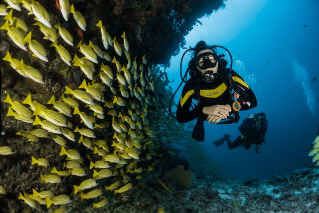 Divers in the Maldives